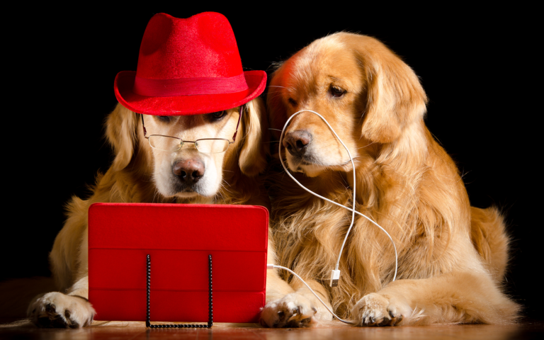 2 dogs with computer and hat